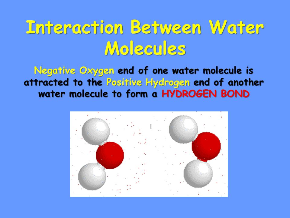 Sticky Molecule Article Water Activity Directions: 1.Color 1.All oxygen RED 2.All hydrogen Blue 3.Two Electrons Yellow 2.Cut all circles 3.Glue 1.Oxygen nucleus over center of O 2.Hydrogen nuclei over H 4.Glue oxygen and Hydrogen to paper 5.Place electrons ask teacher confirmation.