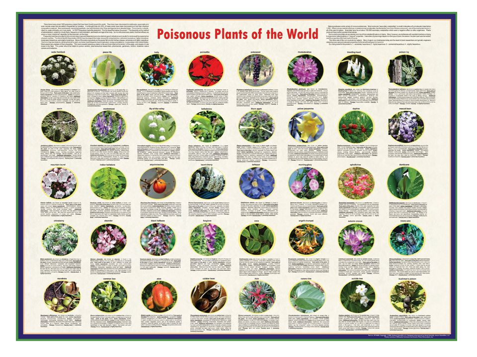 POISONOUS PLANTS Treat unknown plants with respect, and teach your children to do the same.