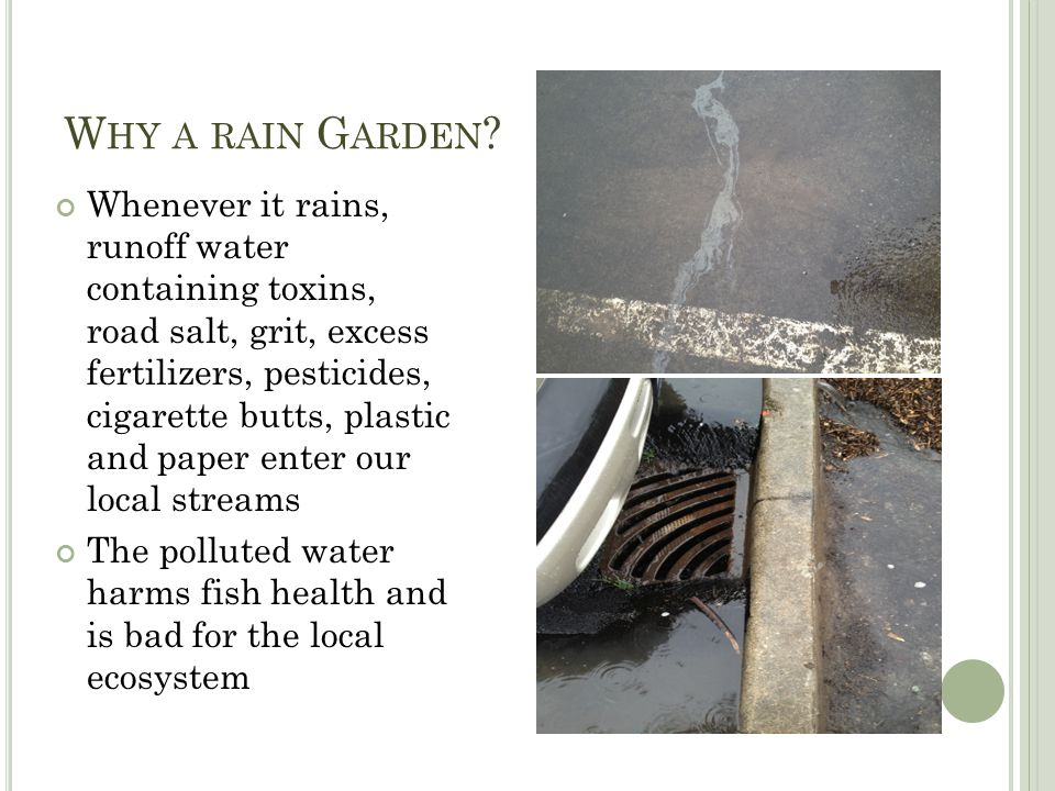 W HY A RAIN G ARDEN ? Whenever it rains, runoff water containing toxins, road salt, grit, excess fertilizers, pesticides, cigarette butts, plastic and