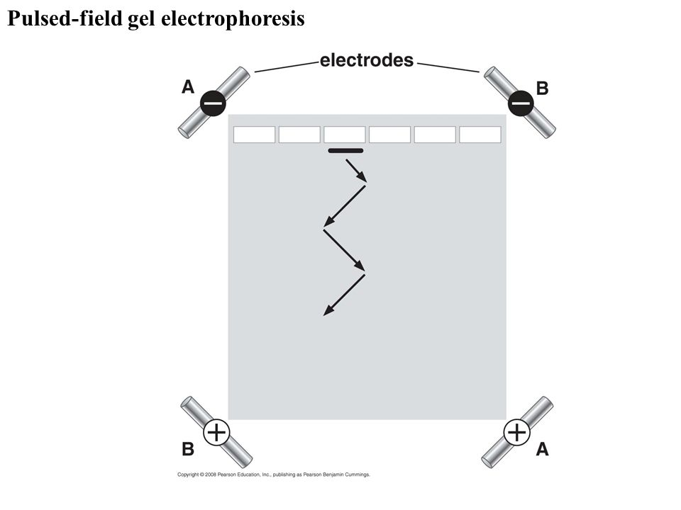 The sample is contained in tubes that are inserted into a ring of cylindrical holes in a metal rotor.