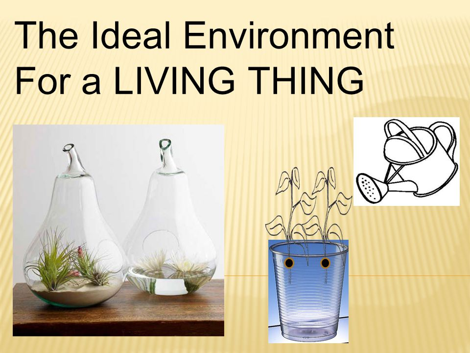 The Ideal Environment For a LIVING THING