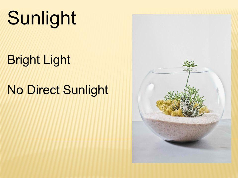 Sunlight Bright Light No Direct Sunlight