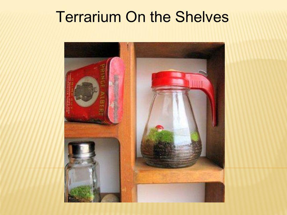 Terrarium On the Shelves