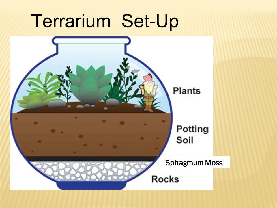 Sphagmum Moss Terrarium Set-Up