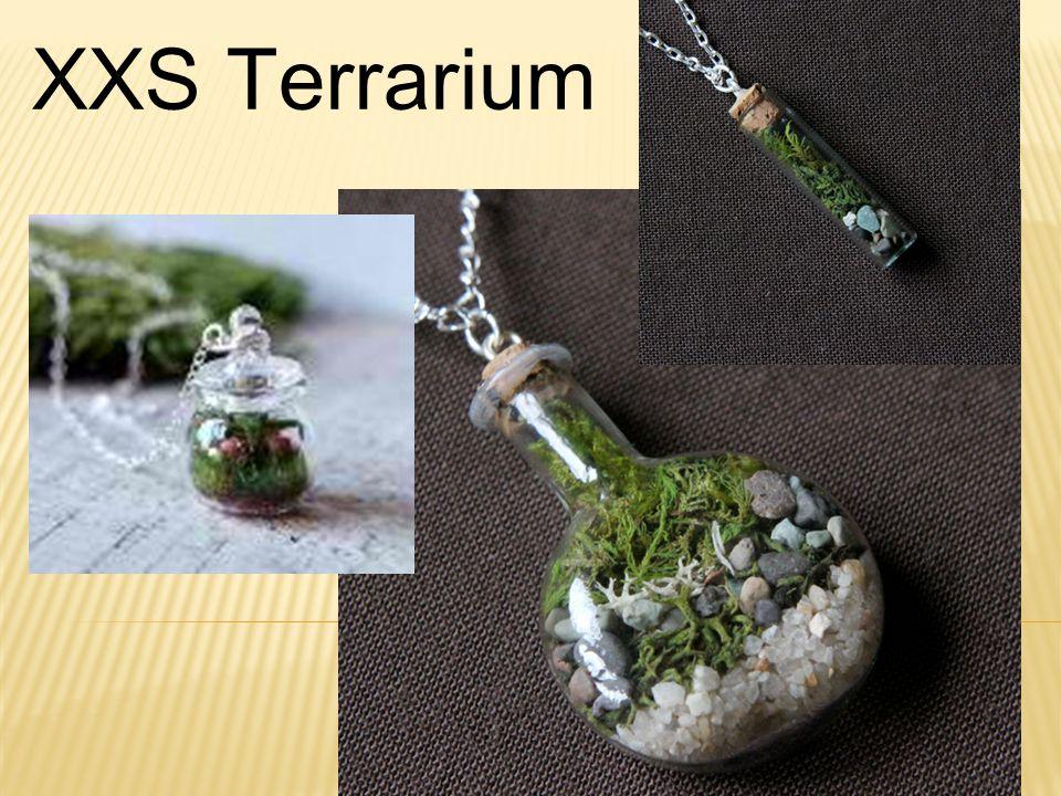 XXS Terrarium