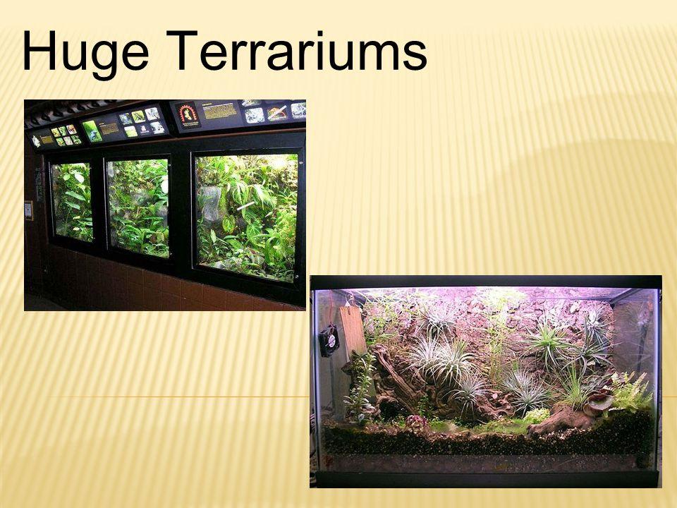 Huge Terrariums