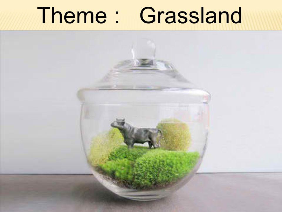 Theme : Grassland