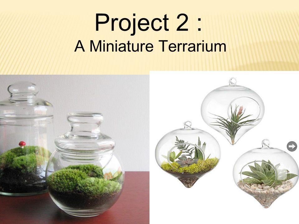 Project 2 : A Miniature Terrarium