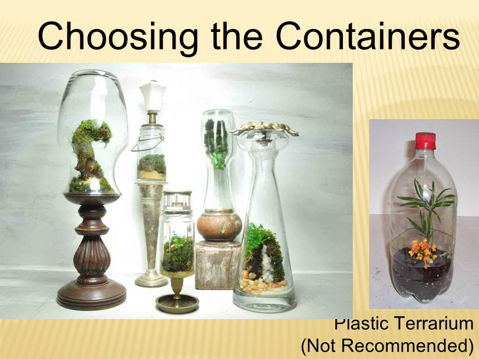 Plastic Terrarium (Not Recommended) Choosing the Containers