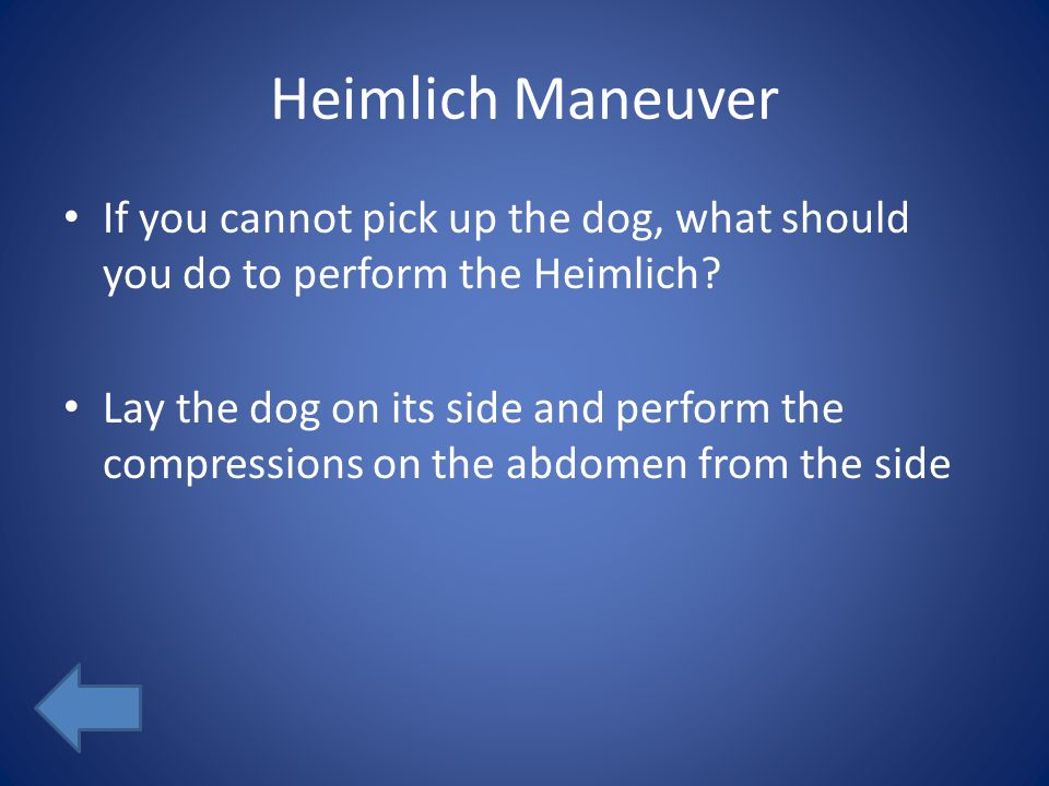 Heimlich Maneuver If you cannot pick up the dog, what should you do to perform the Heimlich.
