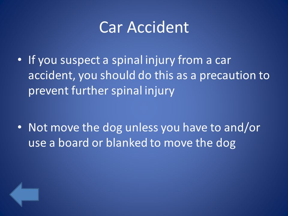 Car Accident If you suspect a spinal injury from a car accident, you should do this as a precaution to prevent further spinal injury Not move the dog unless you have to and/or use a board or blanked to move the dog