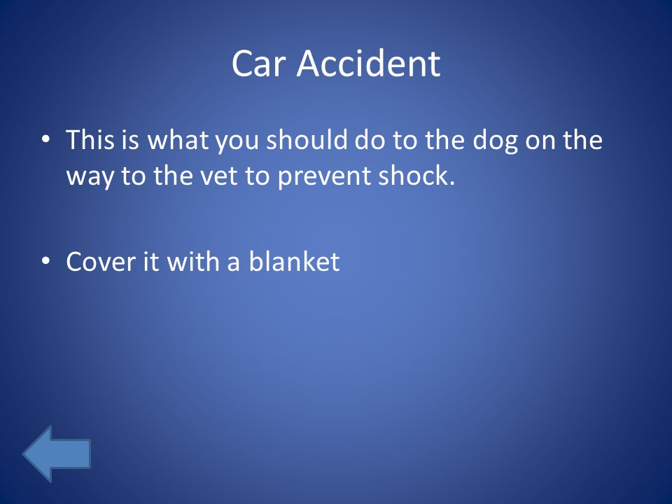 Car Accident This is what you should do to the dog on the way to the vet to prevent shock. Cover it with a blanket
