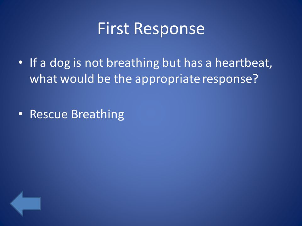 First Response If a dog is not breathing but has a heartbeat, what would be the appropriate response? Rescue Breathing