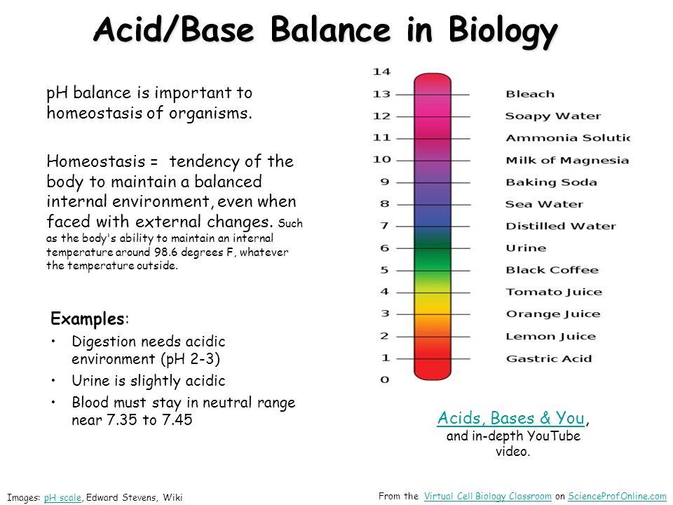 Acid/Base Balance in Biology pH balance is important to homeostasis of organisms.