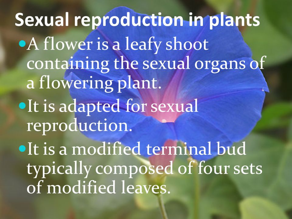 Sexual reproduction in plants A flower is a leafy shoot containing the sexual organs of a flowering plant. It is adapted for sexual reproduction. It i