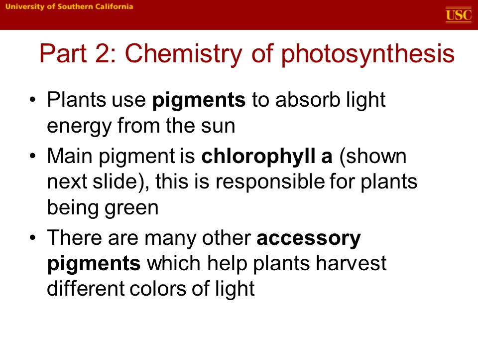 Plants use pigments to absorb light energy from the sun Main pigment is chlorophyll a (shown next slide), this is responsible for plants being green There are many other accessory pigments which help plants harvest different colors of light Part 2: Chemistry of photosynthesis