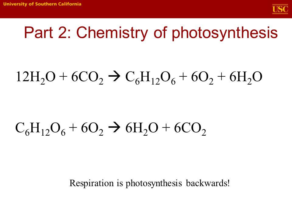 12H 2 O + 6CO 2  C 6 H 12 O 6 + 6O 2 + 6H 2 O C 6 H 12 O 6 + 6O 2  6H 2 O + 6CO 2 Respiration is photosynthesis backwards!