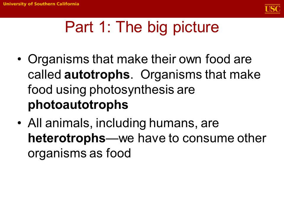 Part 1: The big picture Organisms that make their own food are called autotrophs.