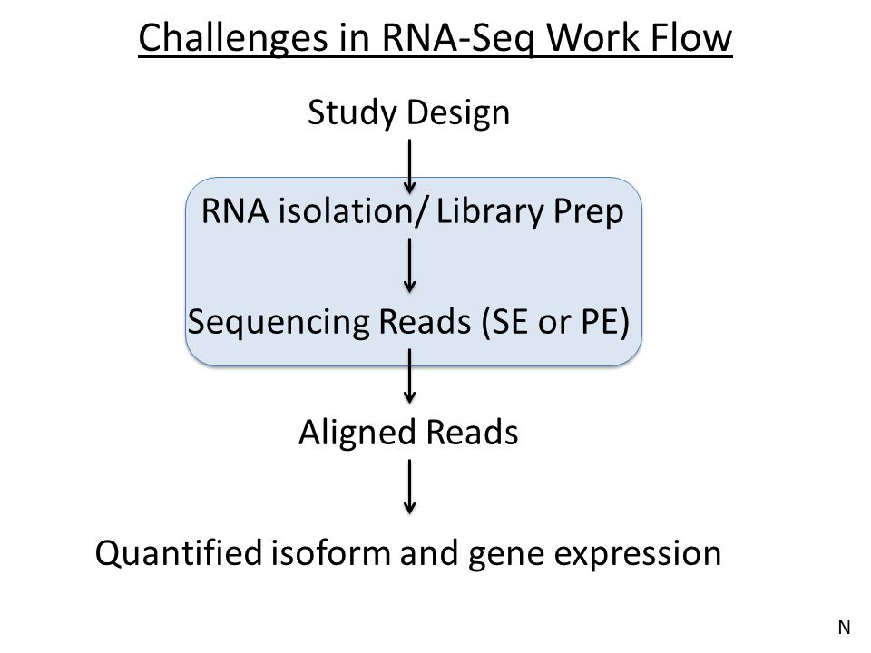 Challenges in RNA-Seq Work Flow Aligned Reads Quantified isoform and gene expression Sequencing Reads (SE or PE) RNA isolation/ Library Prep Study Des