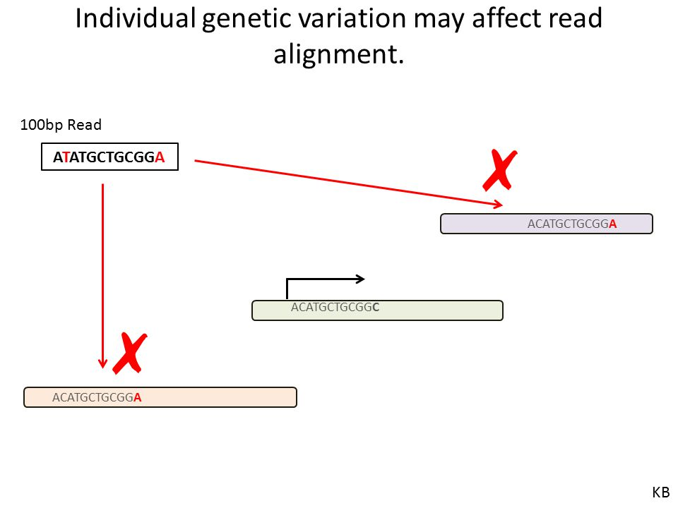 Individual genetic variation may affect read alignment. ACATGCTGCGGA ACATGCTGCGGC ACATGCTGCGGA ATATGCTGCGGA 100bp Read ✗ ✗ KB