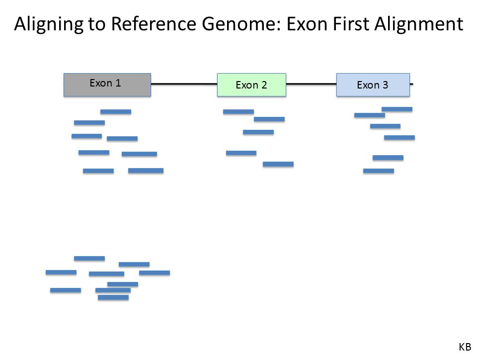 Exon 2 Exon 3 Exon 1 Aligning to Reference Genome: Exon First Alignment KB
