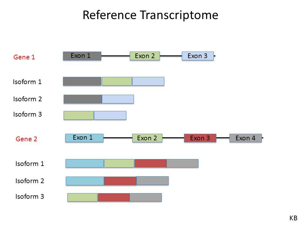 Exon 2 Exon 3 Exon 1 Isoform 1 Isoform 2 Isoform 3 Reference Transcriptome Gene 1 Exon 2 Exon 3 Exon 1 Isoform 1 Isoform 2 Isoform 3 Gene 2 Exon 4 KB