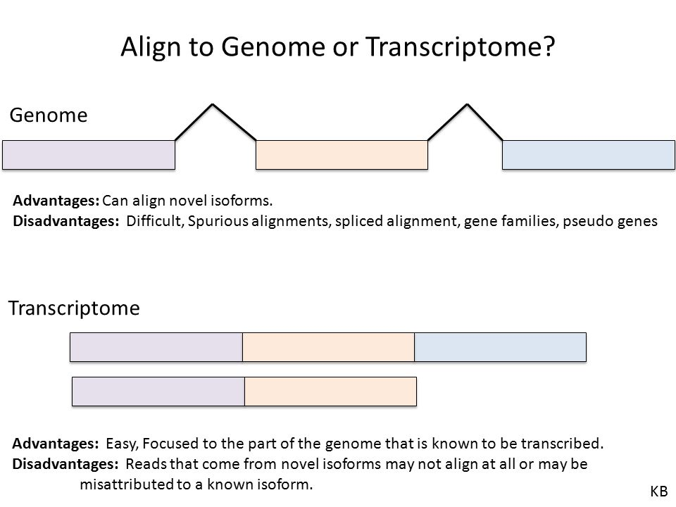 Align to Genome or Transcriptome? Genome Transcriptome Advantages: Easy, Focused to the part of the genome that is known to be transcribed. Disadvanta