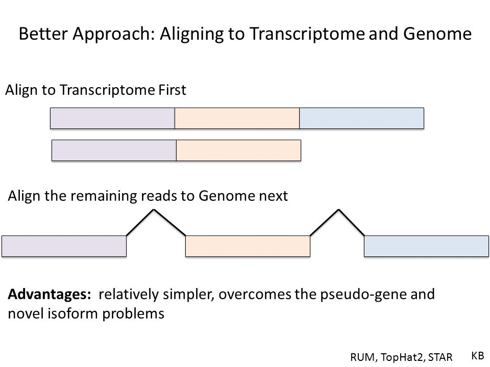 Better Approach: Aligning to Transcriptome and Genome Align to Transcriptome First Advantages: relatively simpler, overcomes the pseudo-gene and novel