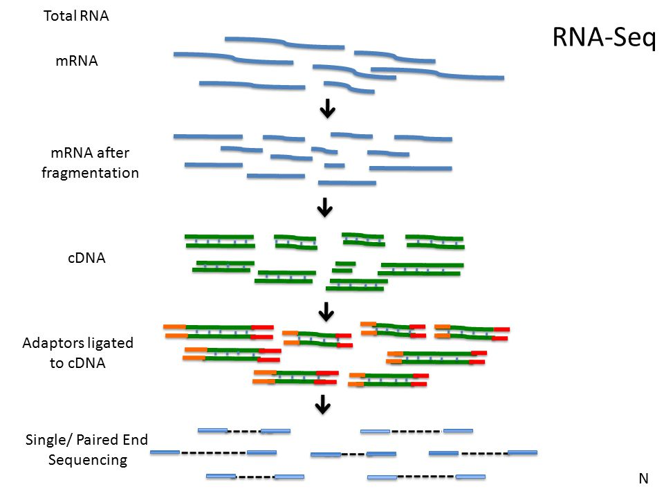 Challenges in RNA-Seq Work Flow Aligned Reads Quantified isoform and gene expression Sequencing Reads (SE or PE) RNA isolation/ Library Prep Study Design N