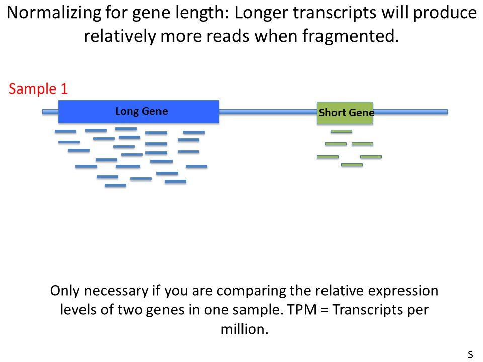 Normalizing for gene length: Longer transcripts will produce relatively more reads when fragmented. Long Gene Short Gene Sample 1 Only necessary if yo