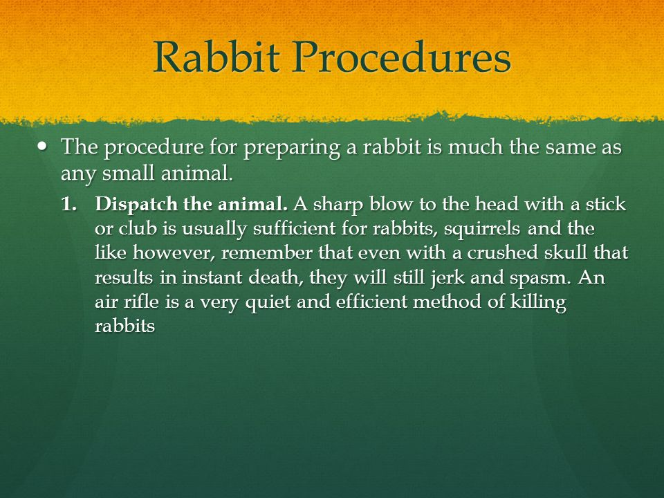 Rabbit Procedures The procedure for preparing a rabbit is much the same as any small animal.