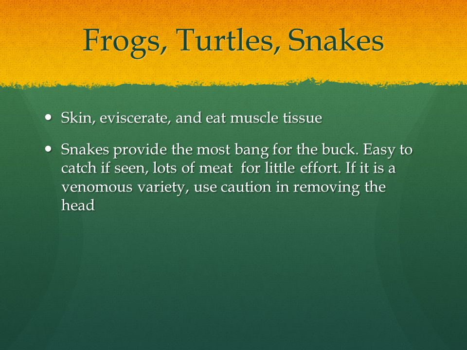 Frogs, Turtles, Snakes Skin, eviscerate, and eat muscle tissue Skin, eviscerate, and eat muscle tissue Snakes provide the most bang for the buck.