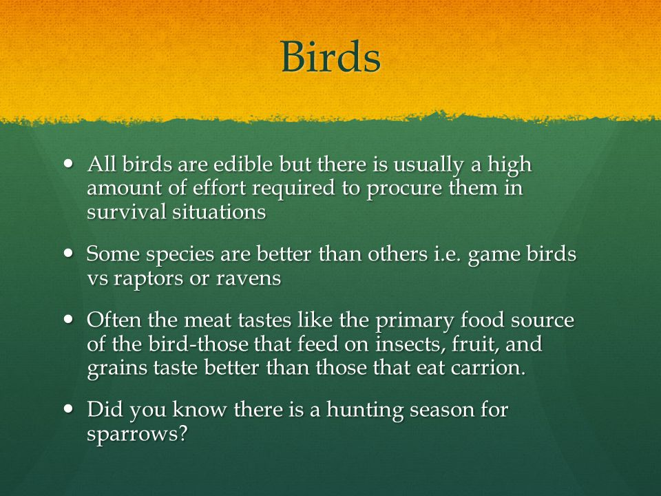 Birds All birds are edible but there is usually a high amount of effort required to procure them in survival situations All birds are edible but there is usually a high amount of effort required to procure them in survival situations Some species are better than others i.e.