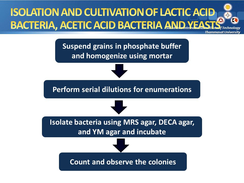 Suspend grains in phosphate buffer and homogenize using mortar Perform serial dilutions for enumerations Isolate bacteria using MRS agar, DECA agar, and YM agar and incubate Count and observe the colonies