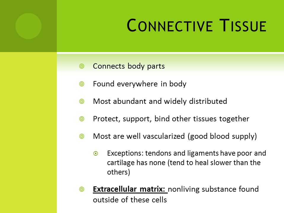 C ONNECTIVE T ISSUE  Connects body parts  Found everywhere in body  Most abundant and widely distributed  Protect, support, bind other tissues together  Most are well vascularized (good blood supply)  Exceptions: tendons and ligaments have poor and cartilage has none (tend to heal slower than the others)  Extracellular matrix: nonliving substance found outside of these cells