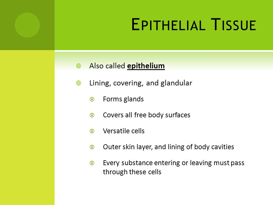 E PITHELIAL T ISSUE  Also called epithelium  Lining, covering, and glandular  Forms glands  Covers all free body surfaces  Versatile cells  Outer skin layer, and lining of body cavities  Every substance entering or leaving must pass through these cells