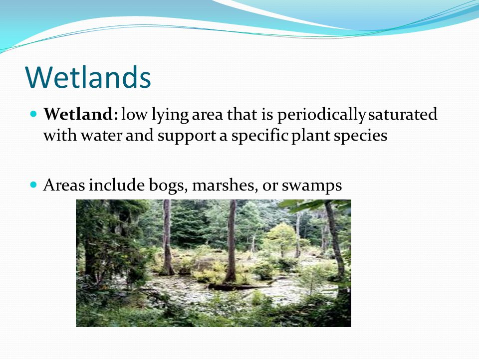 Wetlands Wetland: low lying area that is periodically saturated with water and support a specific plant species Areas include bogs, marshes, or swamps