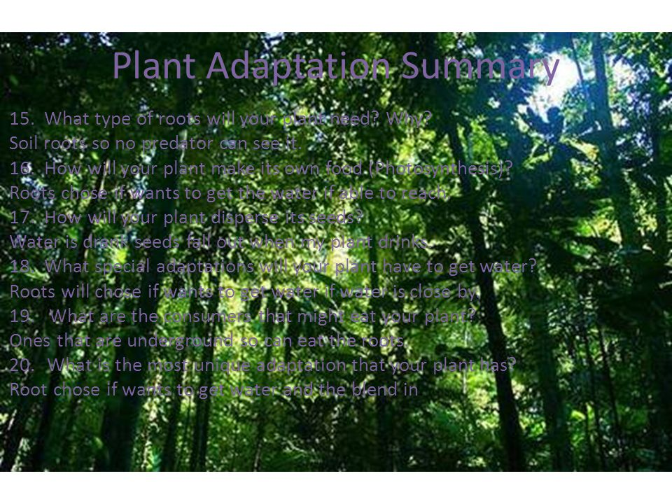 Plant Adaptation Summary 15.What type of roots will your plant need.