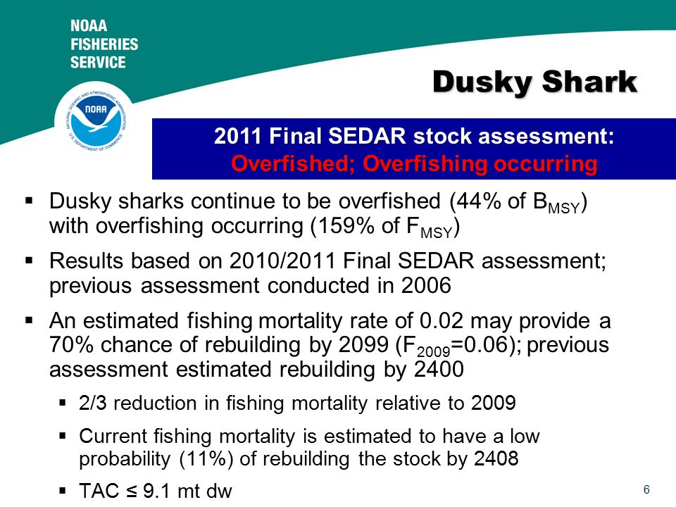 6 Dusky Shark Dusky Shark  Dusky sharks continue to be overfished (44% of B MSY ) with overfishing occurring (159% of F MSY )  Results based on 2010/2011 Final SEDAR assessment; previous assessment conducted in 2006  An estimated fishing mortality rate of 0.02 may provide a 70% chance of rebuilding by 2099 (F 2009 =0.06); previous assessment estimated rebuilding by 2400  2/3 reduction in fishing mortality relative to 2009  Current fishing mortality is estimated to have a low probability (11%) of rebuilding the stock by 2408  TAC ≤ 9.1 mt dw 2011 Final SEDAR stock assessment: Overfished; Overfishing occurring