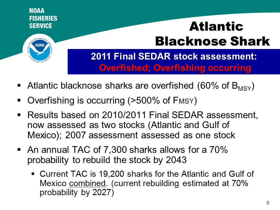 8 Atlantic Blacknose Shark Atlantic Blacknose Shark  Atlantic blacknose sharks are overfished (60% of B MSY )  Overfishing is occurring (>500% of F MSY )  Results based on 2010/2011 Final SEDAR assessment, now assessed as two stocks (Atlantic and Gulf of Mexico); 2007 assessment assessed as one stock  An annual TAC of 7,300 sharks allows for a 70% probability to rebuild the stock by 2043  Current TAC is 19,200 sharks for the Atlantic and Gulf of Mexico combined.