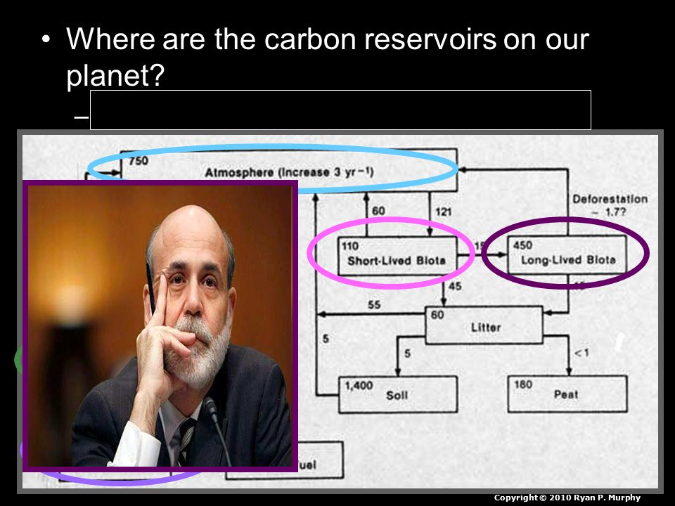 Where are the carbon reservoirs on our planet. –Which ones do human activities impact.