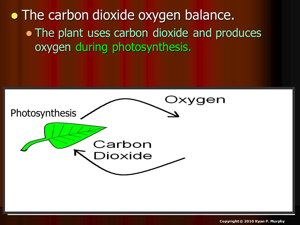 The carbon dioxide oxygen balance. The carbon dioxide oxygen balance. The plant uses carbon dioxide and produces oxygen during photosynthesis. The pla