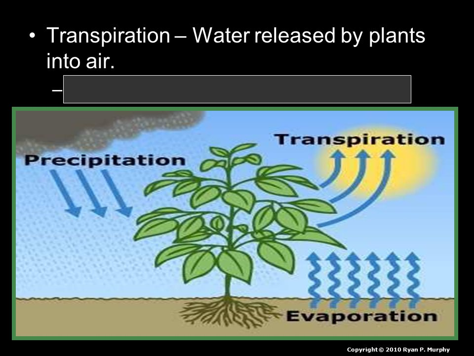 Transpiration – Water released by plants into air.