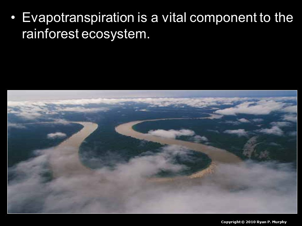 Evapotranspiration is a vital component to the rainforest ecosystem.