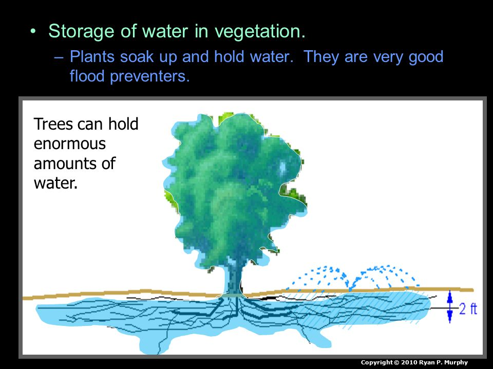 Storage of water in vegetation. –Plants soak up and hold water.