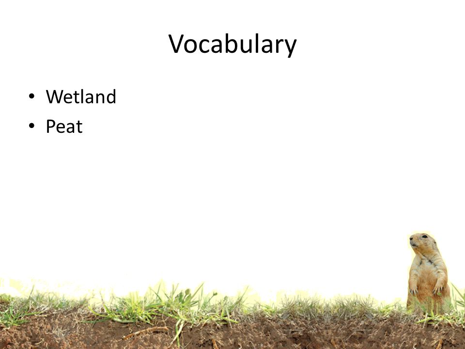 Vocabulary Wetland Peat