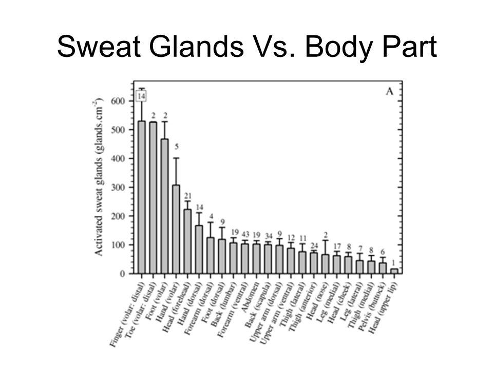 Sweat Glands Vs. Body Part