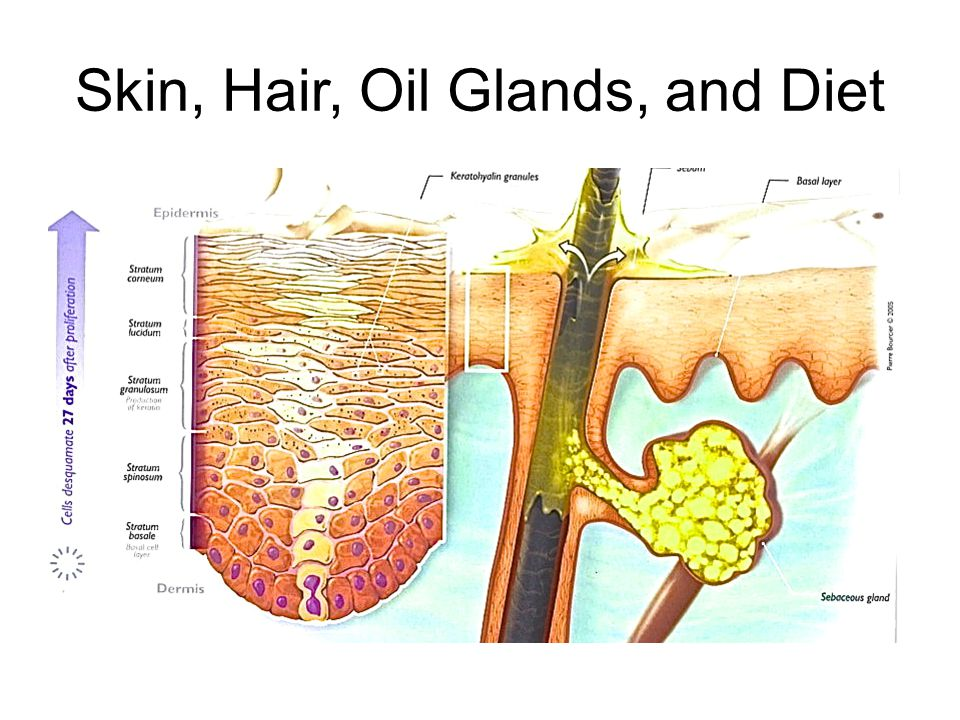 Skin, Hair, Oil Glands, and Diet