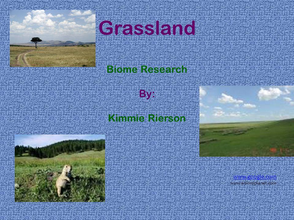 Grassland Biome Research By: Kimmie Rierson www.google.com www.animslplanet.com
