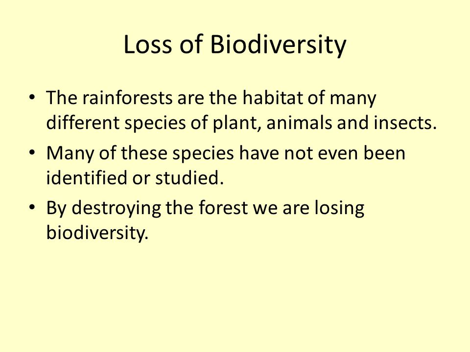 Loss of Biodiversity The rainforests are the habitat of many different species of plant, animals and insects. Many of these species have not even been